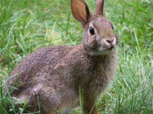 alimentacion conejo